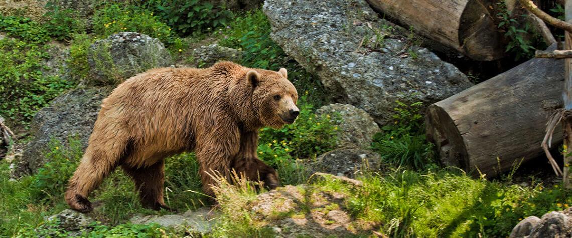 Zoo Salzburg - Ausflugsziele Salzburger Land & Stadt Salzburg