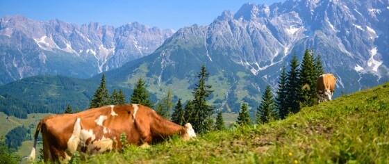 Sommerurlaub in Dienten - Region Hochkönig